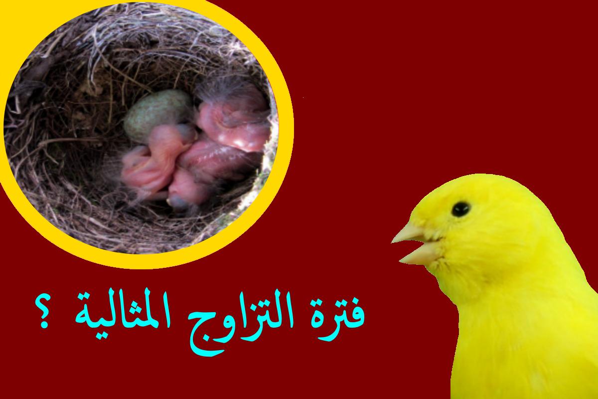 في اي شهر يبدأ الإنتاج عند طيور الزينة طائر الحسون طائر الكناري وبعض طيور الزينة Parrot Bird Birds