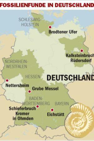Wo Findet Man Steinpilze In Hessen