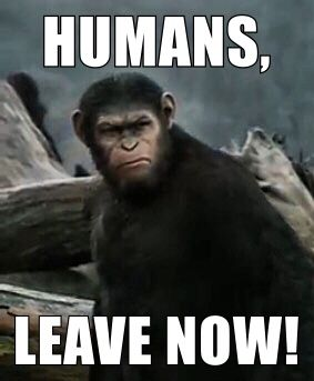 A Meme That Perfectly Describes Me Planet Of The Apes Dawn Of The Planet Memes