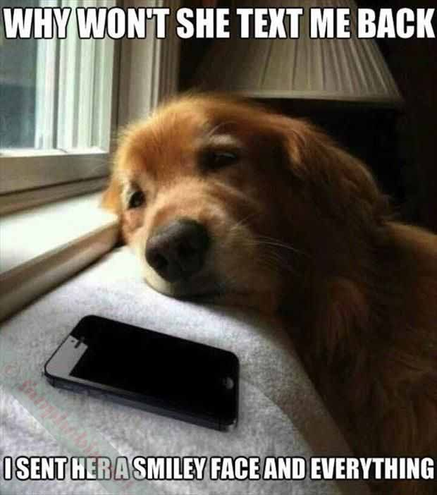 Funny Dog Faces With Quotes Quotesgram Terry And Beeps Funny