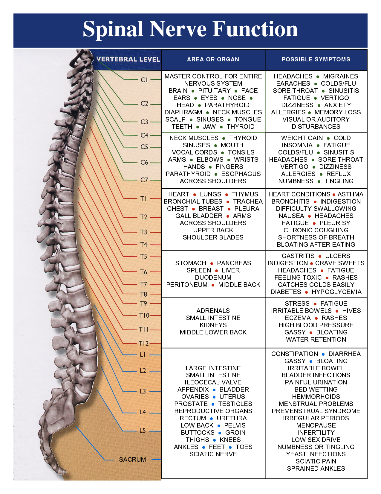 Lumbar Spinal Nerves Diagram Mitsubishi Shogun Wiring A Healthy Spine Is Important To Your Overall Health And