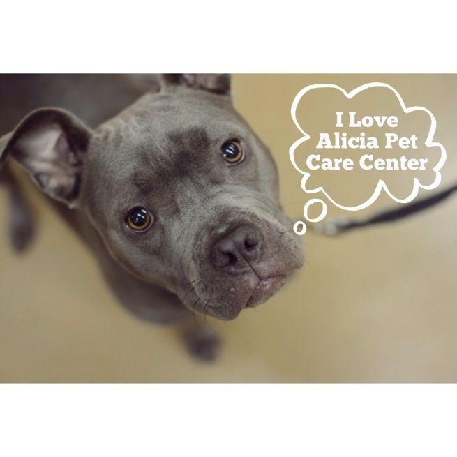 Alicia Pet Care Center, Mission Viejo, CA