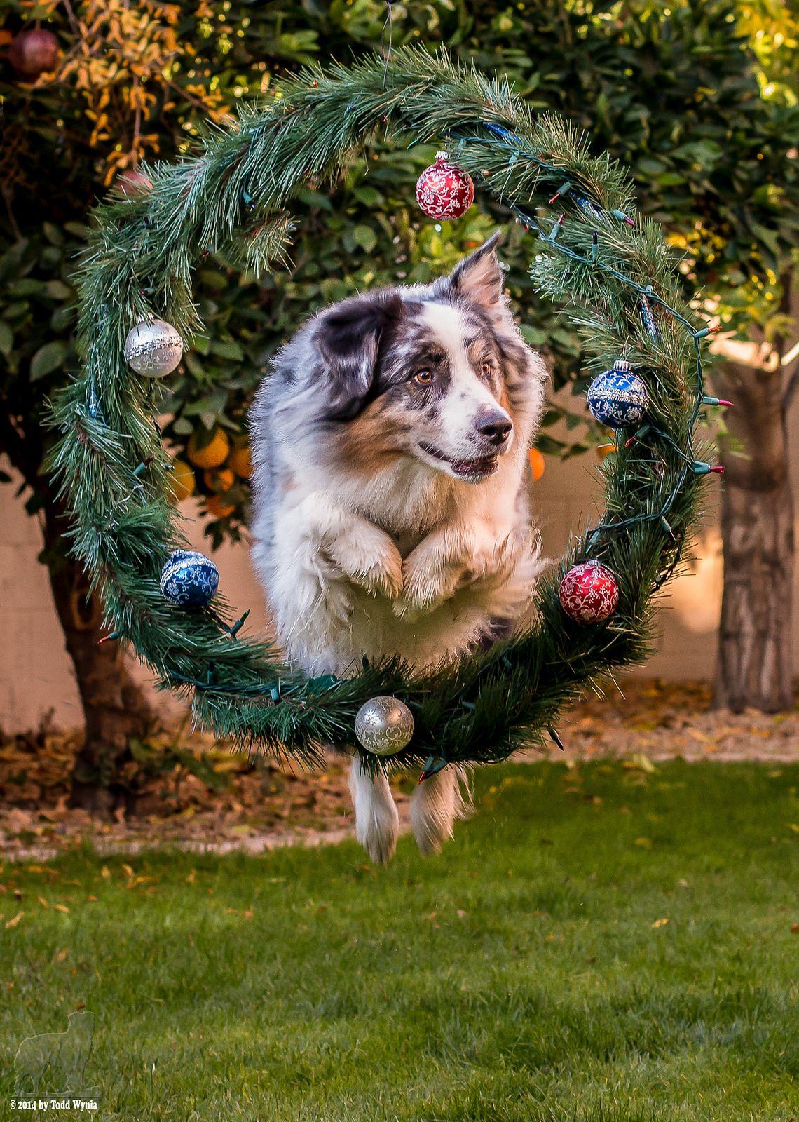Flickr Christmas agility