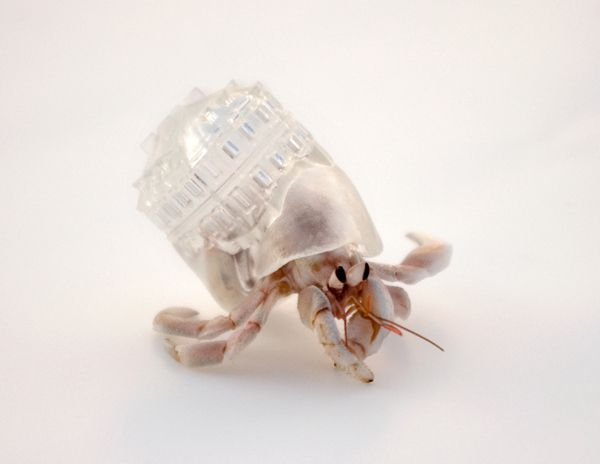 """Aki Inomata """"Why Not Hand Over a 'Shelter' to Hermit Crabs?"""" 2009"""