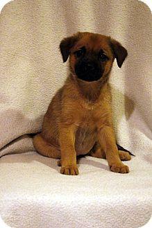 Fowlerville Mi Pug Wirehaired Fox Terrier Mix Meet Greta A