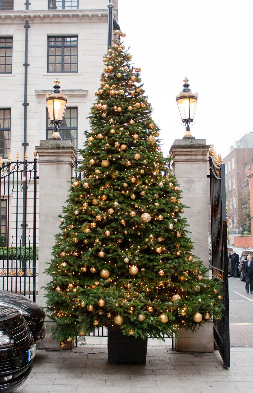 20 Ft Christmas Tree.20 Ft Tree At Grosvenor House Hotel By Indoor Garden Design