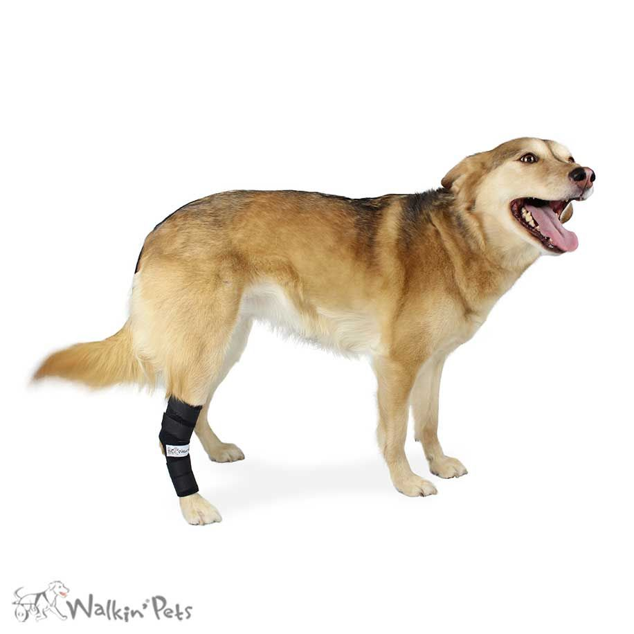 No Knuckling Training Sock Dog Dragging Back Paws Dogs Pets Paw