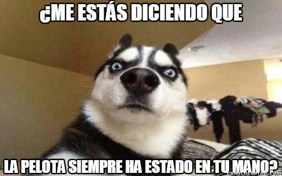 Memes En Espanol Google Search Dog Expressions Funny Animals Animal Fails