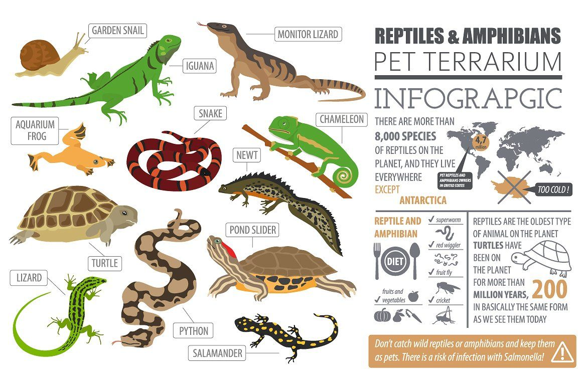 Pet Reptiles And Amphibians Set Reptiles And Amphibians Reptiles Pet Reptiles