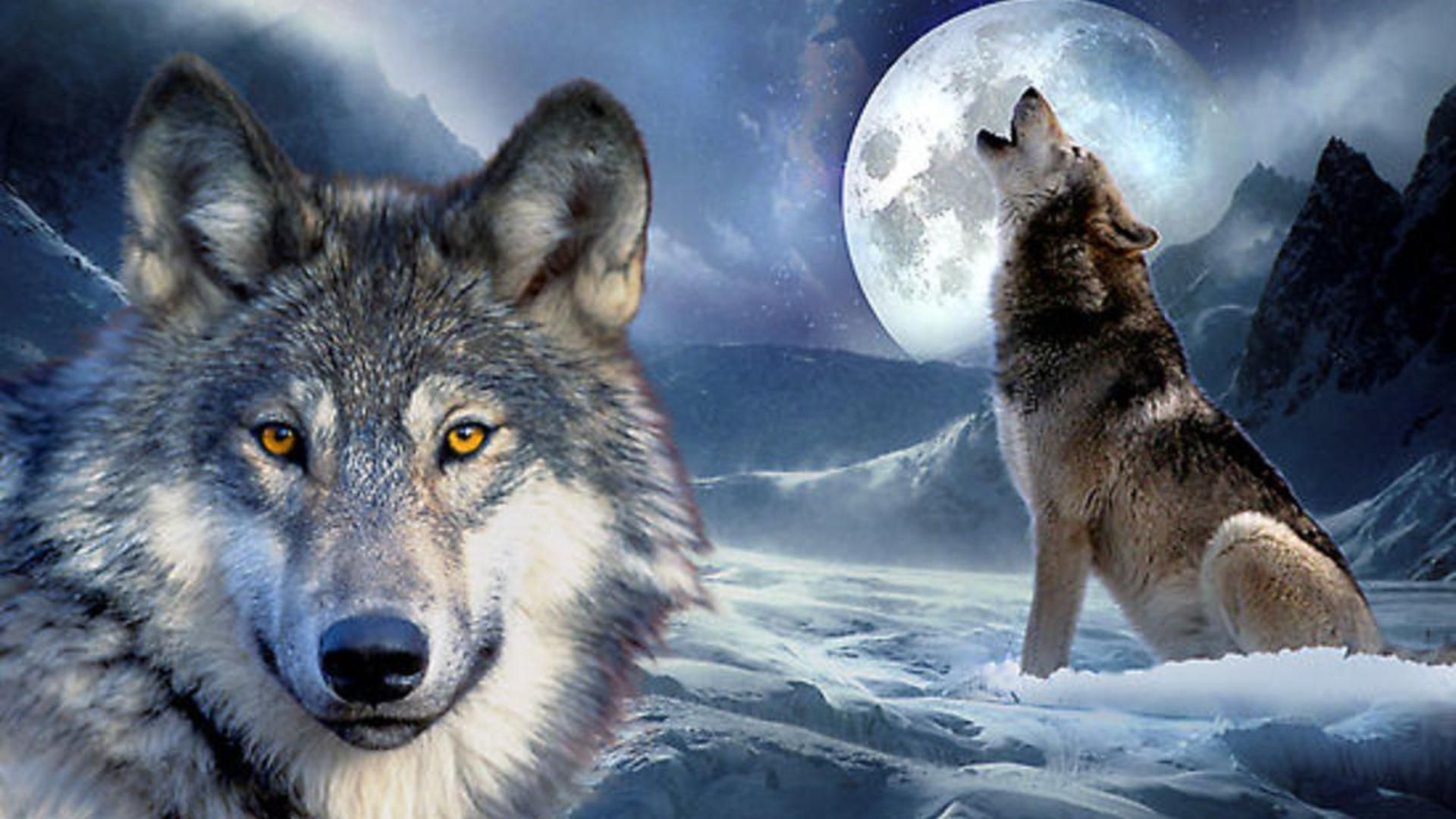 Wolves howling at the moon hd howling at the moon - Wolf howling hd ...