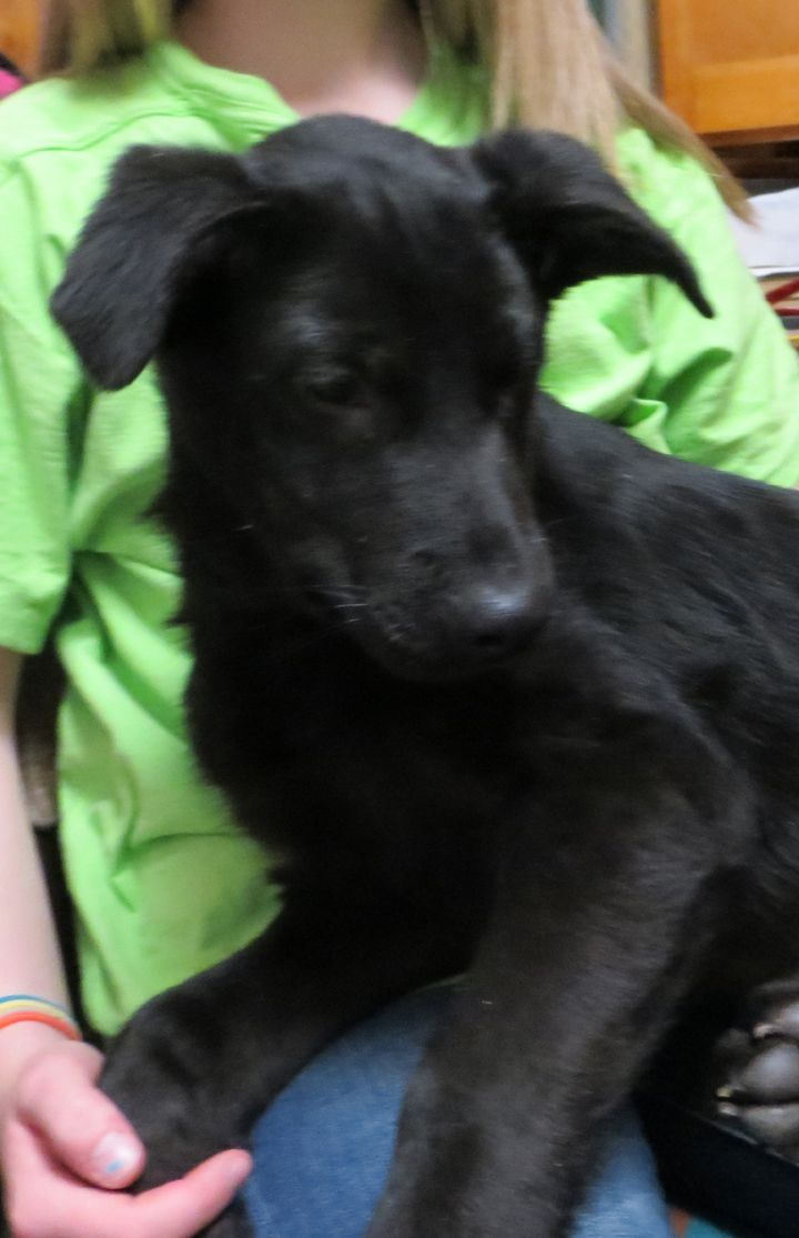Puppies for rescue mn