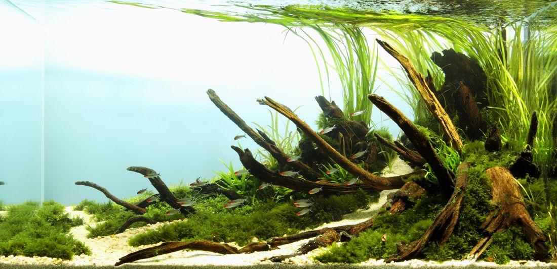 Layout Nature Style Aquascape