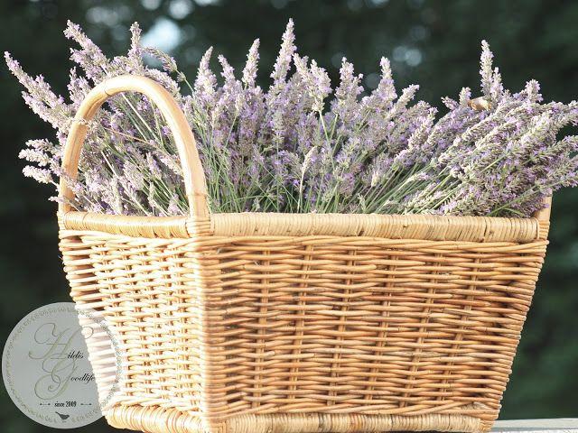 Lavendelernte 2017! Der Gartenblog Cluster Garten - Gartenblogger - pflegeleichter garten anlegen