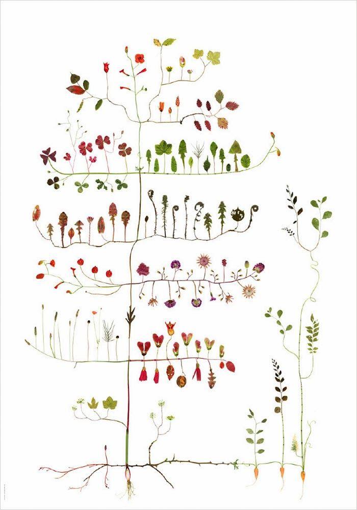 Las ilustraciones con plantas y flores de Lotta Olsson - Emeemejewels   Blog