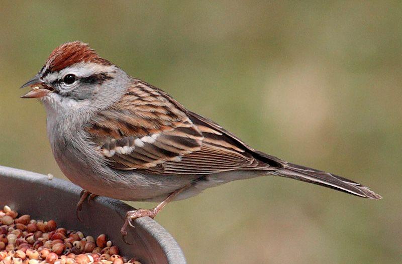 Birds In Michigan