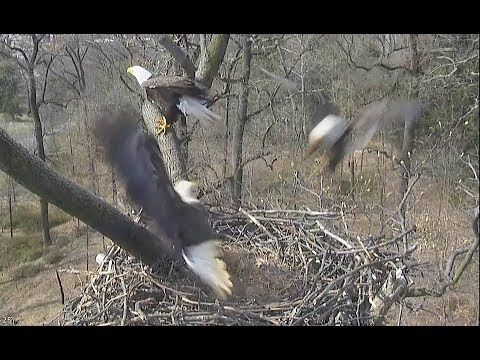 AEF NADC EAGLE CAM 25 MAR 2019 A Visitor Learns a