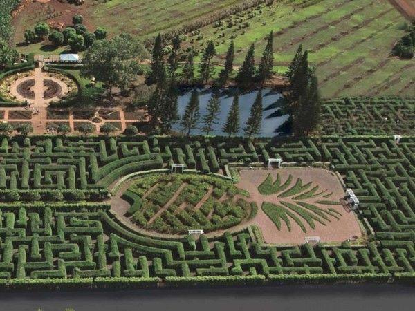 The Pineapple Garden Maze, Hawaii, US (© Dole Plantation)
