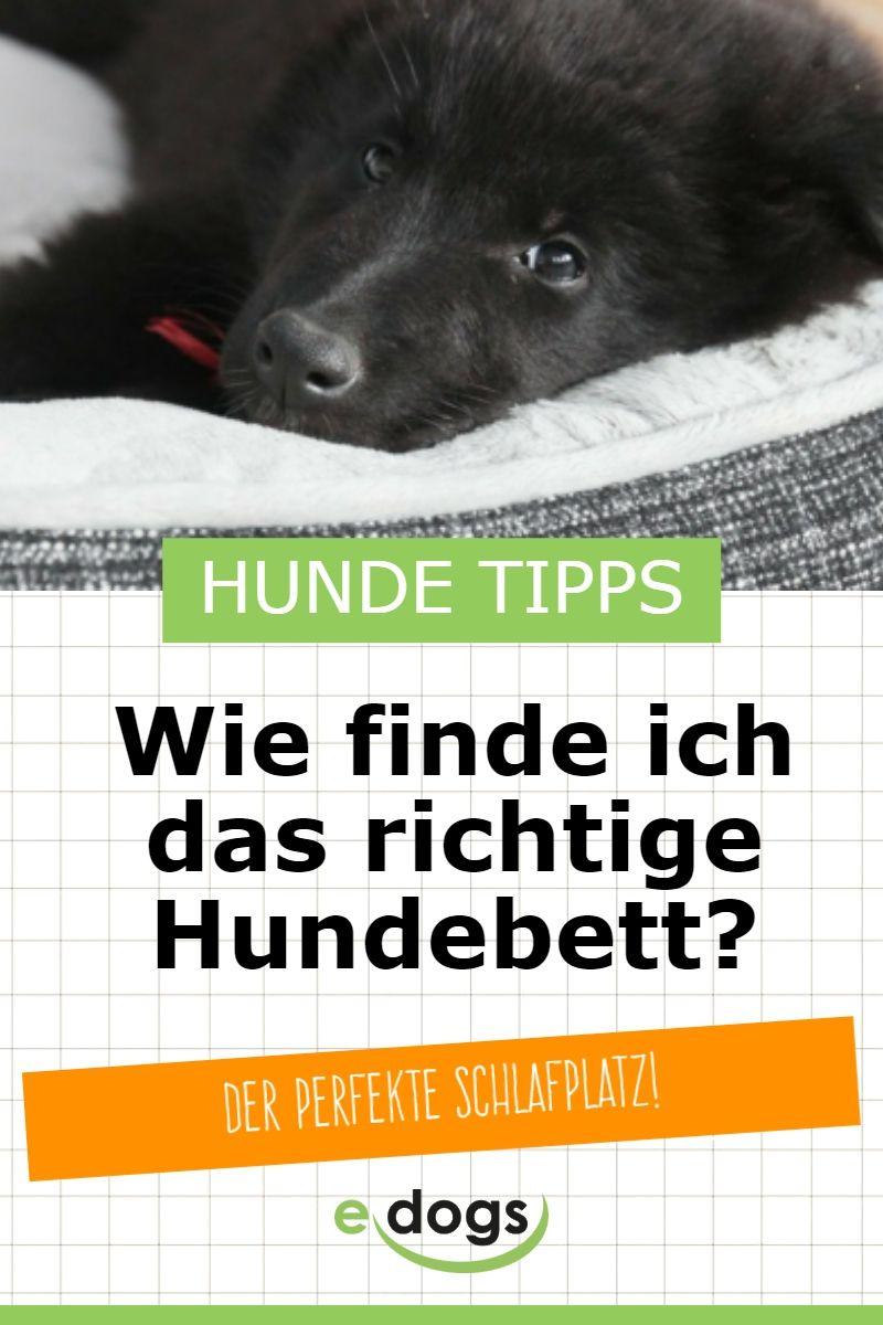 Das Richtige Hundebett Finden Hunde Bett Hundebett Hunde