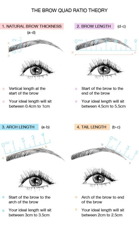 The Brow Quad Ratio Theory With Images Perfect Eyebrows