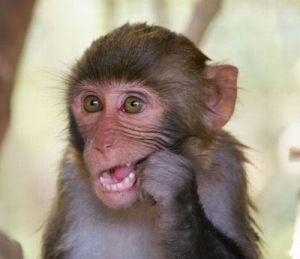 My Pet Monkey Ruined My Kitchen Cute Baby Monkey Pet Monkey Cute Monkey