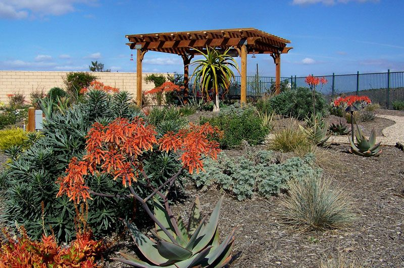 Drought Tolerant Landscape After Letz Design Landscape San Diego
