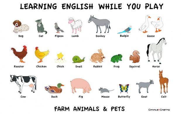Nombres De Animales En Ingles Lesson Easy English Animals Http Bit Ly Ingleskype Animales English