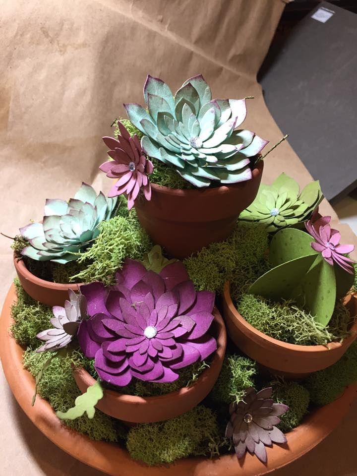 L'image contient peut-être : plante et fleur