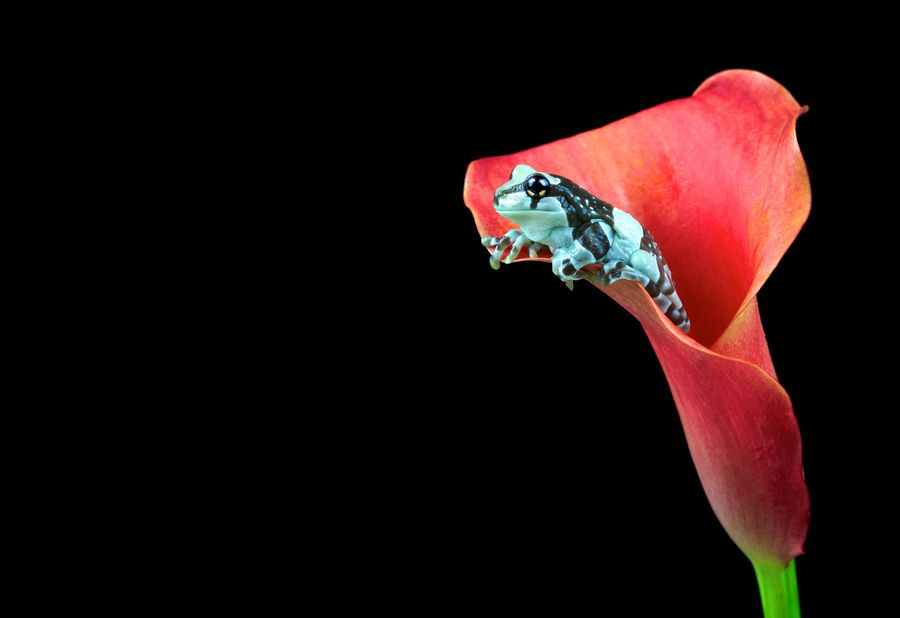 err.. frog in a flower? by Mark Bridger on 500px