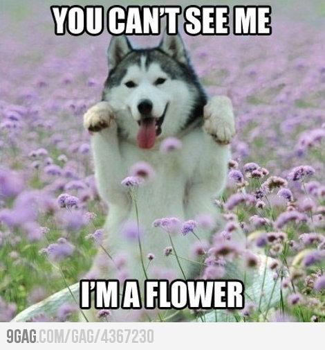 Cutest flower evurrr!  ---   Minipet Online Pet Boutique is a Melbourne-based fo...,  #Boutiq... #animalcaptions
