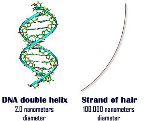 DNA double-helix 2.0 nanometers and a strand of hair 100,000 ...