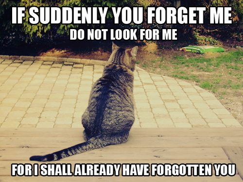 If You Forget Me Cats Cat Person Cats And Kittens