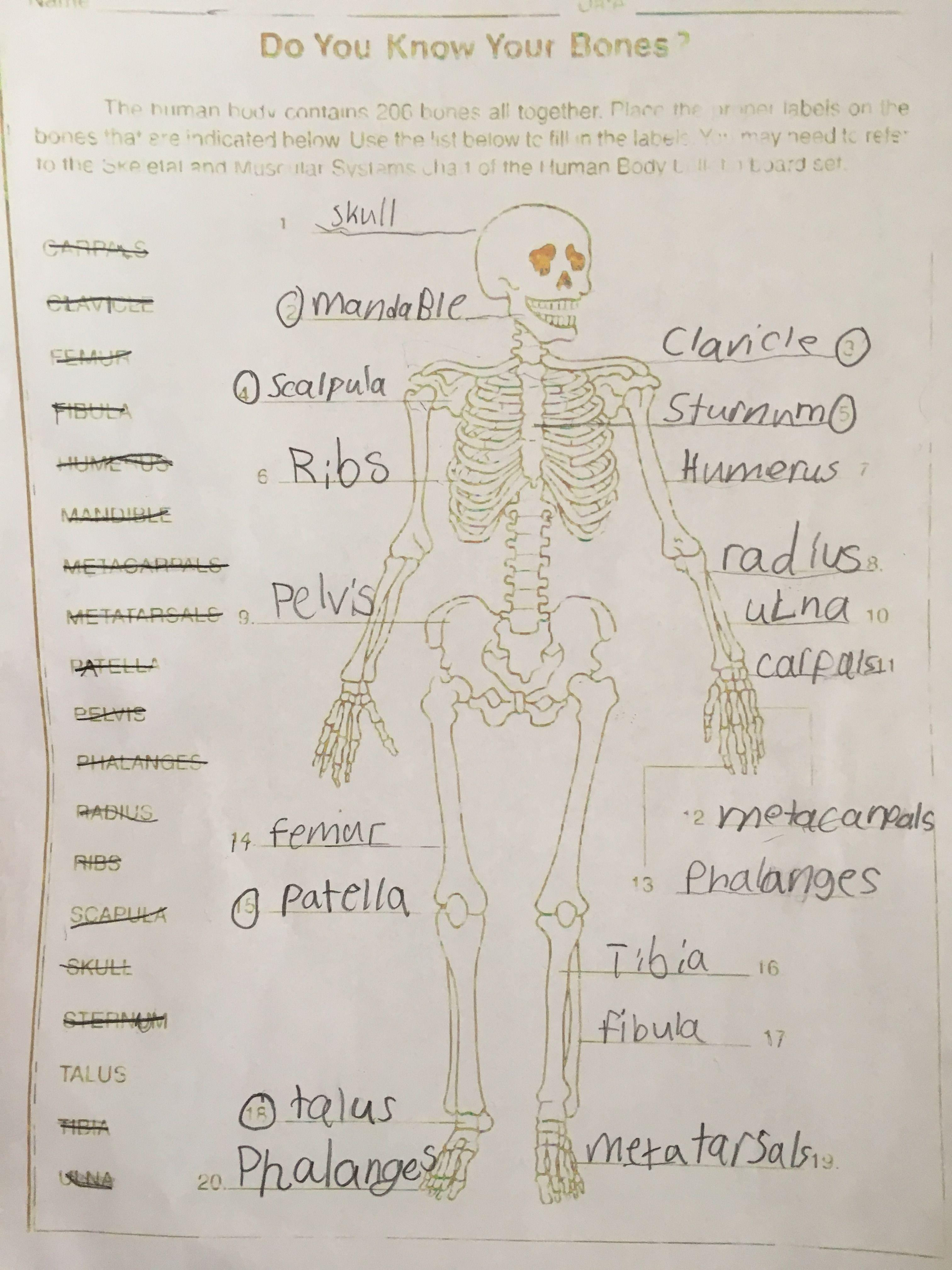 Bones Worksheet For Nutrition Club