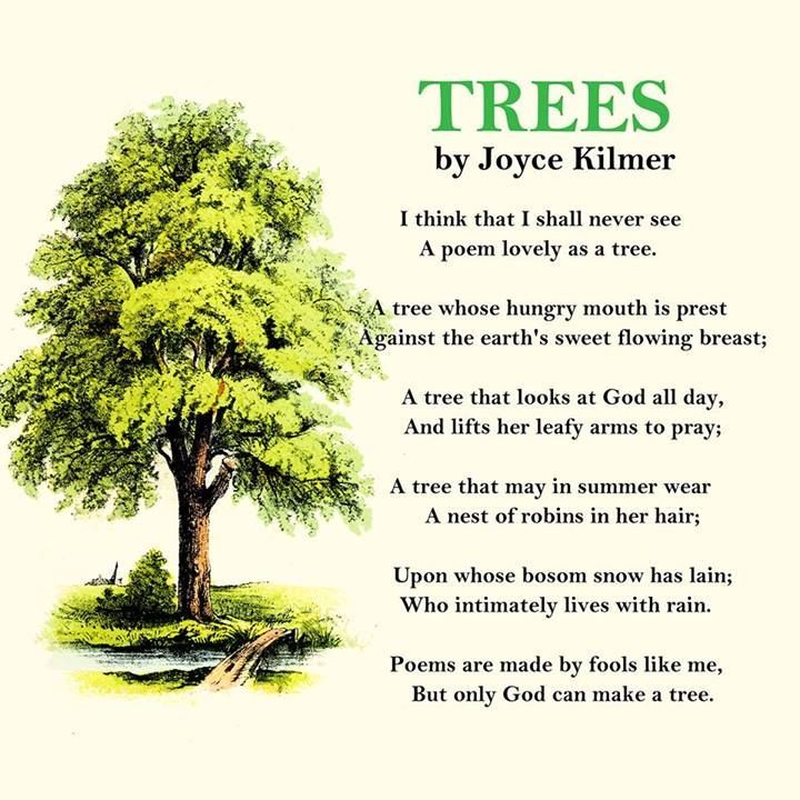Image result for contemporary poems about trees | Nature ...