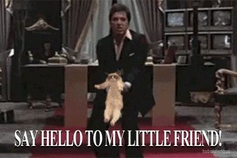 Funny Meme To Say Hello : Say hello to my little friend! : funnies with animals pinterest