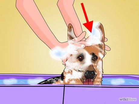 Kill Fleas With Dawn Dishsoap Fleas Dog Training Near Me Puppy