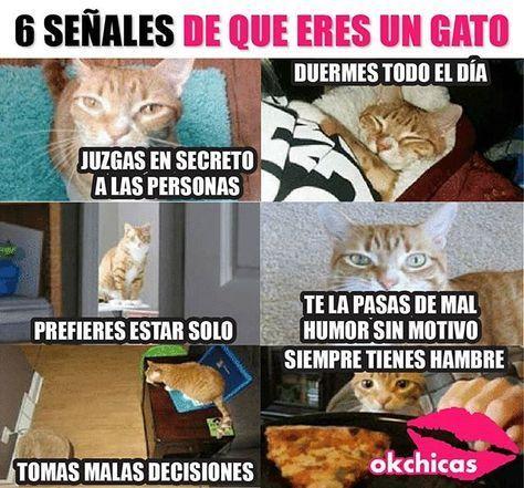 Y Lo Mas Importante Odias A Todos Gatosgraciososfondos Importante Mas Odias Todos Funny Memes Memes Quotes Memes