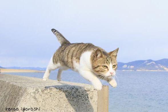 ASCII.jp:ぎゃんかわ「飛び猫」ネットで話題に 五十嵐健太さん