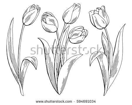 Tulip Flower Graphic Black White Isolated Sketch Illustration Vector Tulip Cizim Egitimleri Cizim