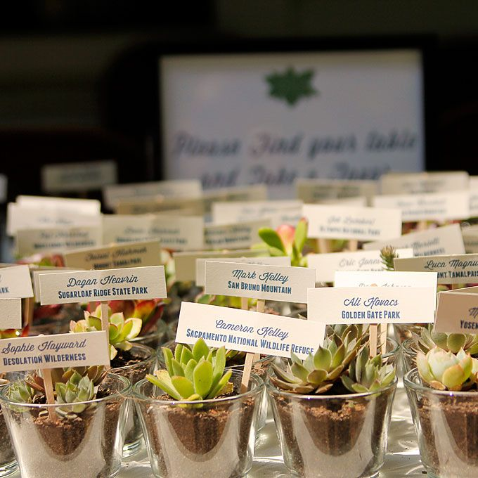 Wedding Favors Gift Ideas Plant Wedding Favors Succulent Wedding Favors Diy Wedding Favors Cheap