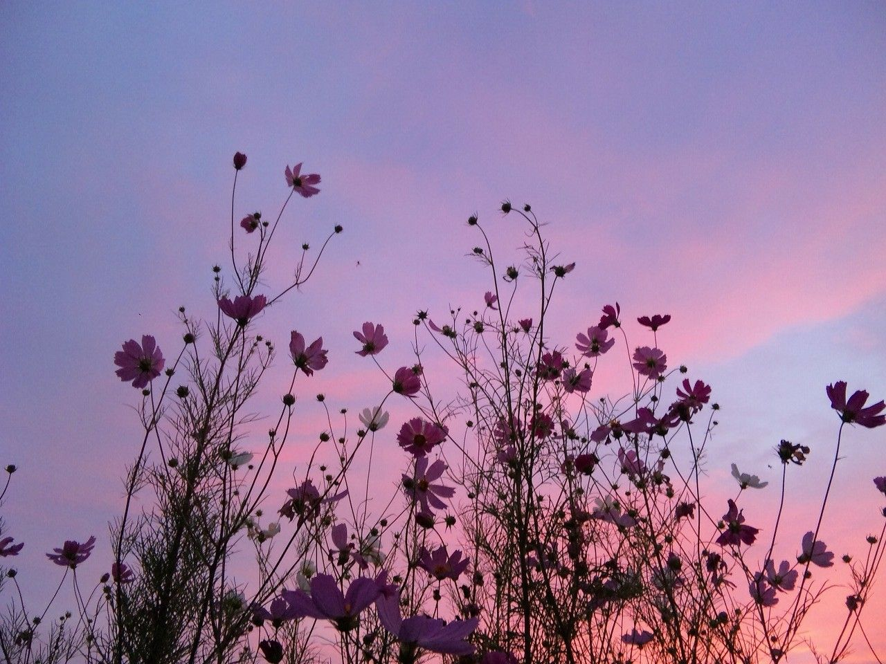 Pinterest Feelingsofgabe Purple Aesthetic Art Photography Nature