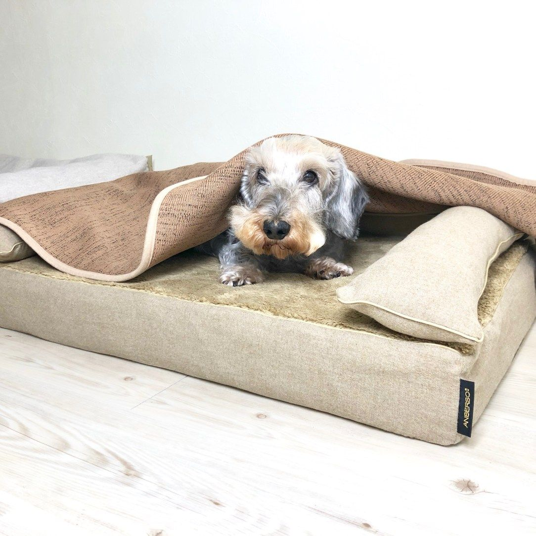 午前中はヒーターを入れています 犬のベッド アンベルソ公式ブログ さすがにまだ床の暖房は入れていないけど シニアの寒がりムックくんのために午前中は ヒーターを入れています 暑がりのメンちゃんはオフィス内が暑すぎて 涼しいところに避難しています