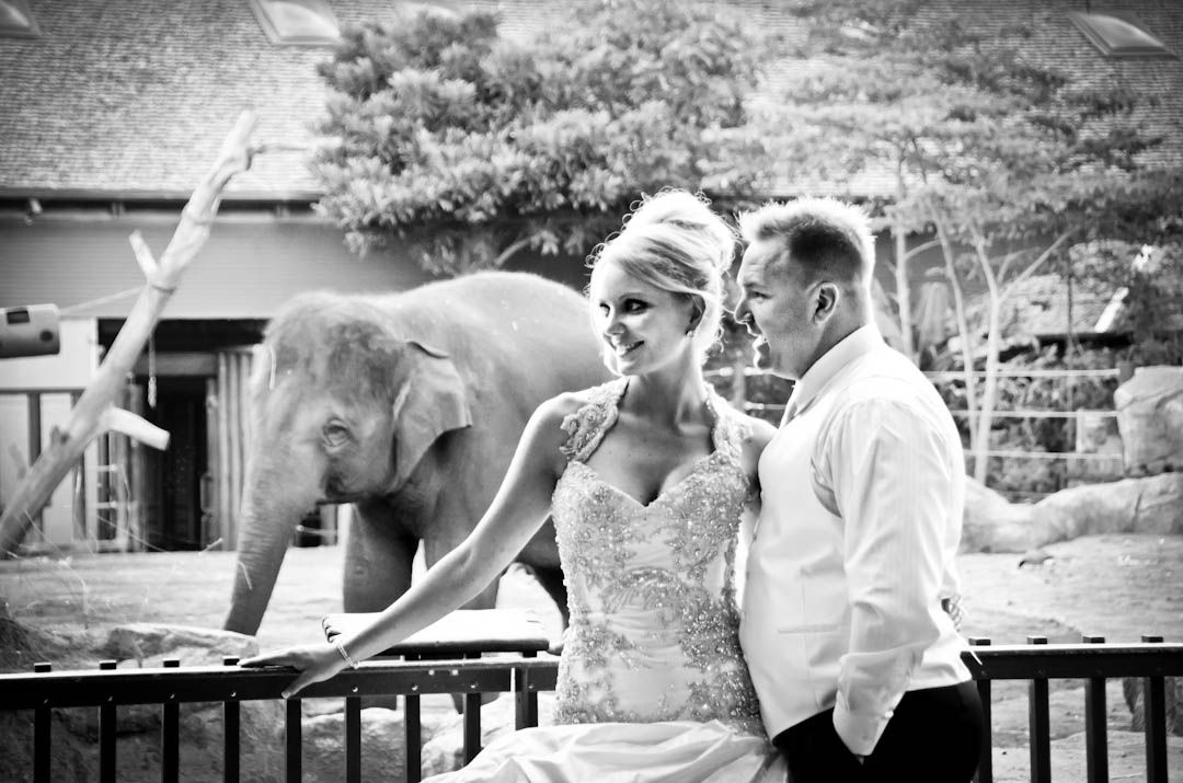 Sydney Has Some Iconic Locations For Wedding Photos Including Taronga Zoo