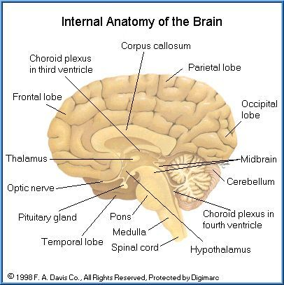 Free toxicology course on neurotoxicity anatomy and physiology of really detailed diagram of the brain wish it was colorful but its helpful clean picture the brain is so complex with so many parts to it ccuart Images