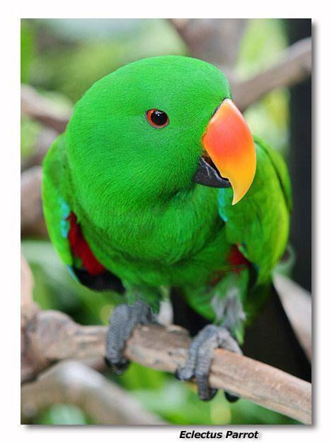Looks Like Jack Animals Parrot Animal Hospital