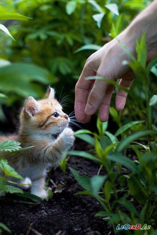 Sweet Panda Dan 3w Legend Az əfsanə Olmaq Istəyən Bizimlədi Eurovision 2013 Geyimler Sac Duzumleri Mentiq Afo Kittens Cutest Cute Animals Cats
