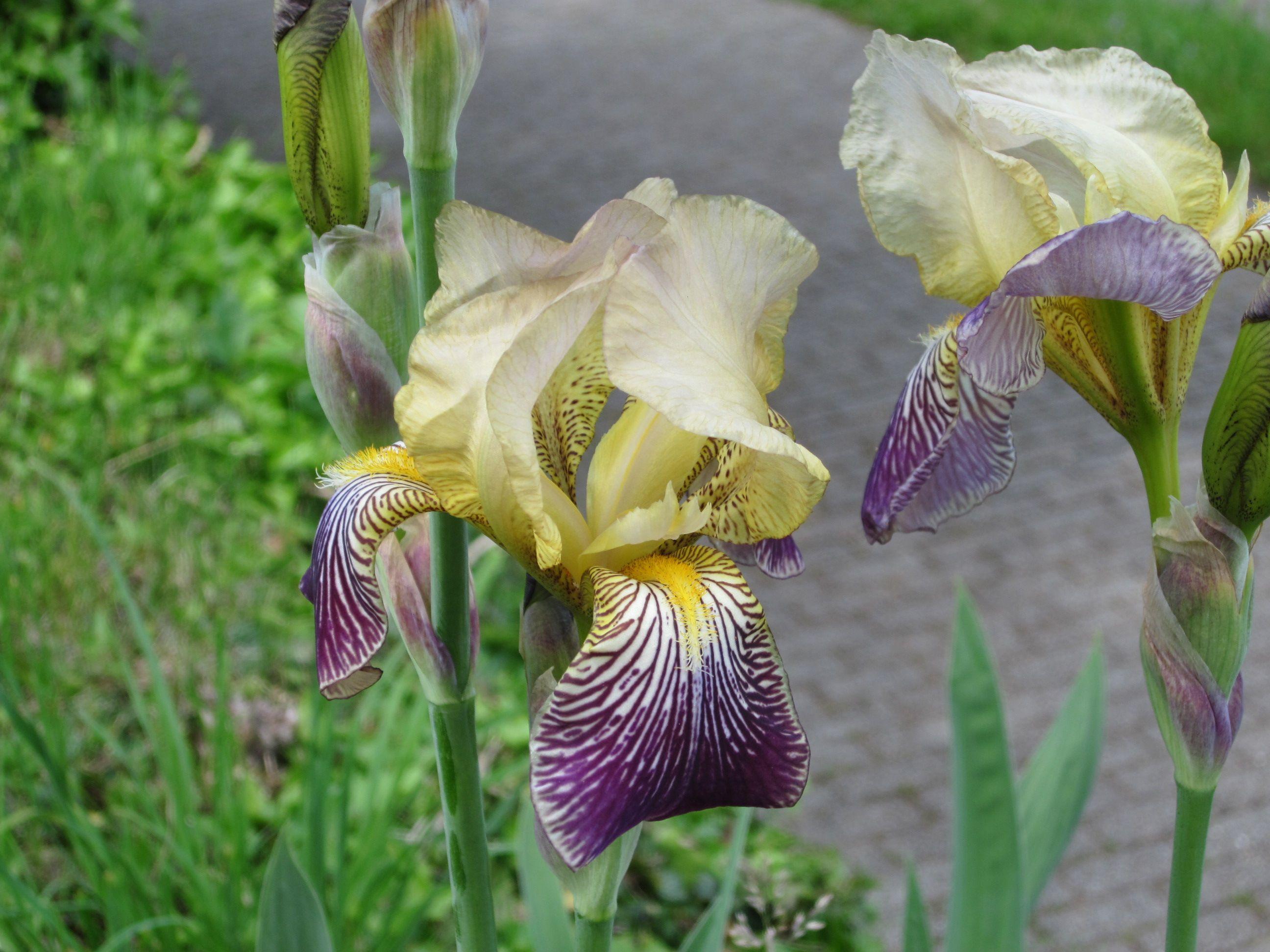 Orchideen am Teehaus/ Bopser Stuttgart