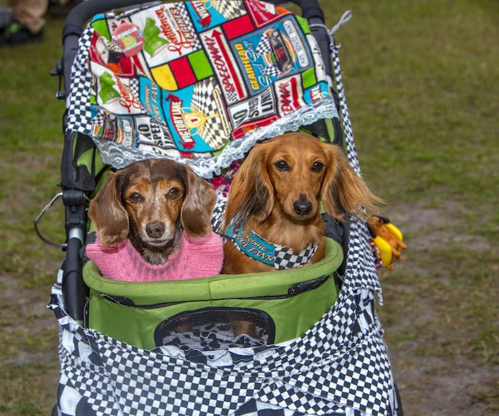Puppy rescue central florida