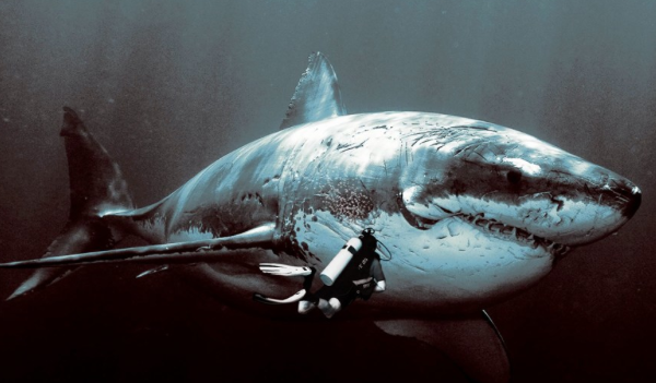 Megalodon Is Alive! Scientific Fishing Trip Reveals Evidence During Shark Week On Discovery ...
