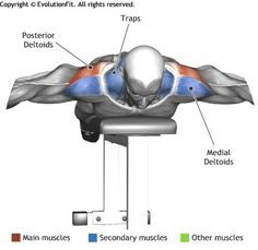 Shoulders Dumbbell Lying Flat Bench Circle Work Out