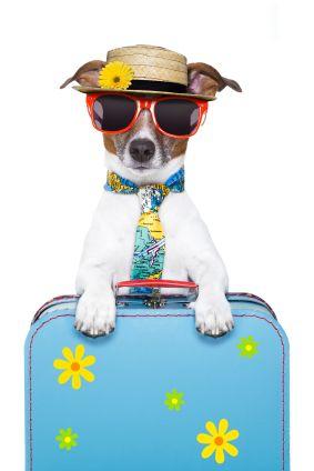 Pin Em Life With A Dog